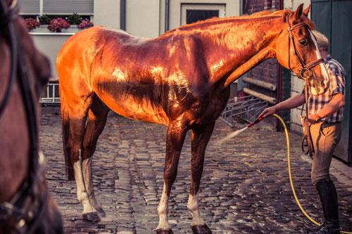 venta de productos para la limpieza y cuidado de caballos